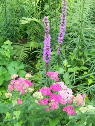 As Far As Maintenance, I Prefer To Keep The Flowers Deadheaded For Looks  And For Bloom That Lasts A Bit Longer. After The Spring/early Summer Blooms  Are ...
